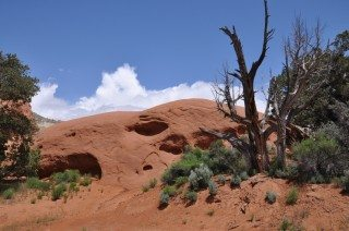 Sandstone Mound With Tree