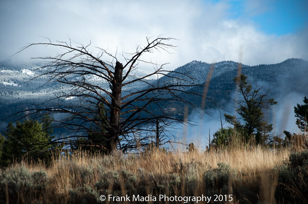 While at Floating Island Lake, I turned and looked over my right shoulder to see this very frosty landscape.