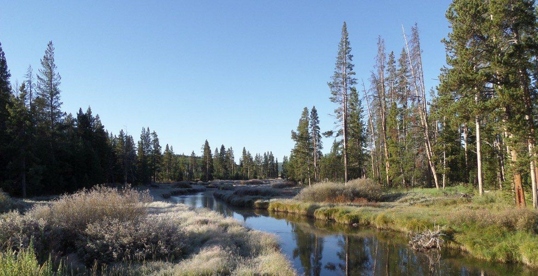 Frosty Morning Along Obsidian Creek