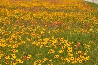 Field of Spring wildflowers