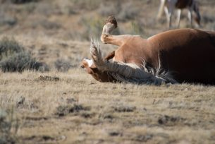 Wild Horse With an Itch